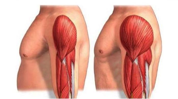 Ganar músculo y recuperar.